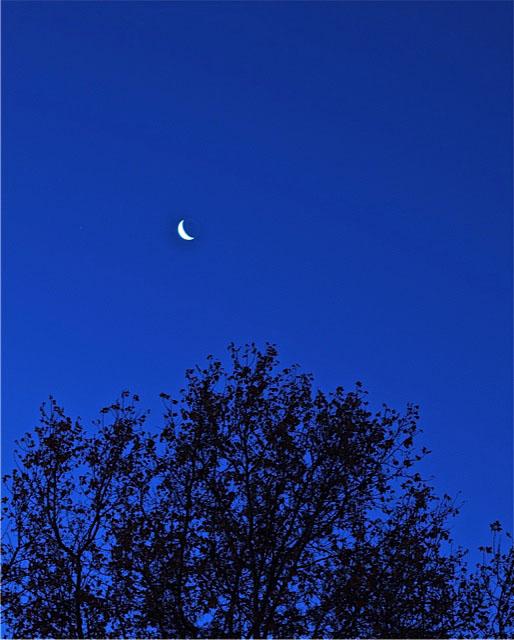 Amanecer luna copia